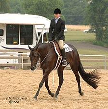 ~ Comment bien échauffer son cheval avant une scéance d'obstacle ~ QueenoftheBluessm